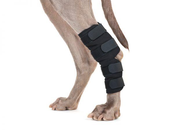 Sprunggelenkschoner für Hunde